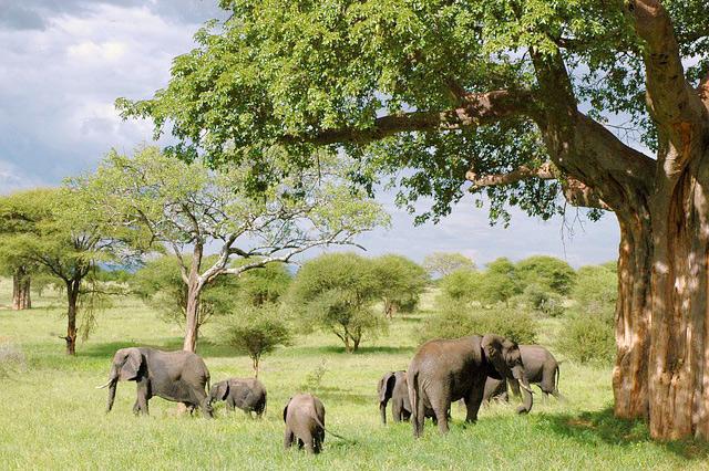 Detektei Afrika